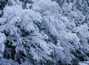 雪景 羅漢渓谷の写真素材 [FYI03319746]