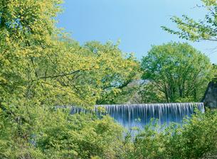 新緑の木谷渓谷の写真素材 [FYI03319774]