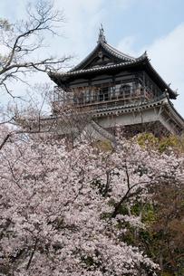 広島城天守閣と桜の写真素材 [FYI03319801]