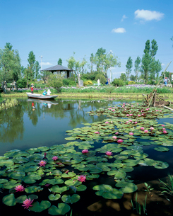 睡蓮 水生植物園の写真素材 [FYI03319845]