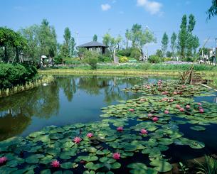 睡蓮 水生植物園の写真素材 [FYI03319846]