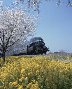 SL(C12・真岡鉄道)の写真素材 [FYI03319931]
