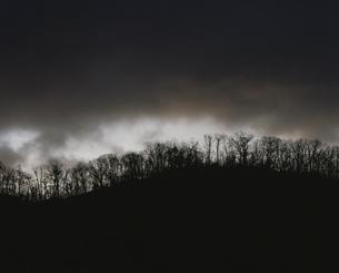 樹林の夜明け 12月  奥日光  栃木県の写真素材 [FYI03319935]