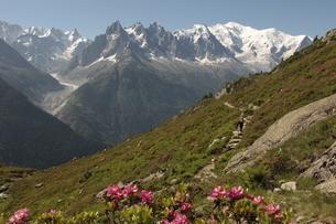フレジェール~モンロックへのハイキングコースよりモンブラン山群の写真素材 [FYI03321551]