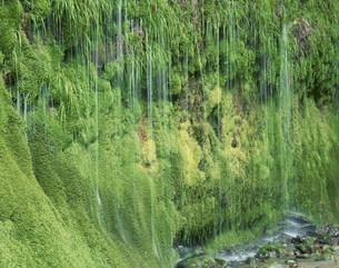コケと岩清水の写真素材 [FYI03322738]