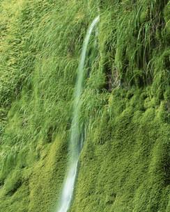 岩清水の写真素材 [FYI03322740]