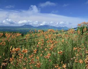 オニユリの花と阿蘇 産山村の写真素材 [FYI03324099]