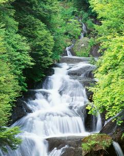 新緑と竜頭の滝の写真素材 [FYI03329257]