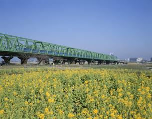春の荒川赤羽緑地の写真素材 [FYI03329552]
