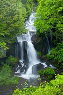 初夏の清流 竜頭ノ滝の写真素材 [FYI03330540]