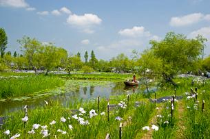 水生植物園のアヤメ祭の写真素材 [FYI03330591]