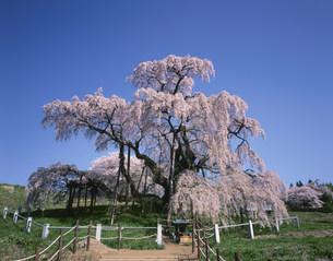 滝桜の写真素材 [FYI03331220]