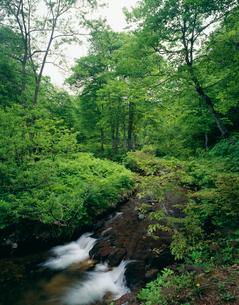 せせらぎのみち 奥利根水源の森の写真素材 [FYI03332384]