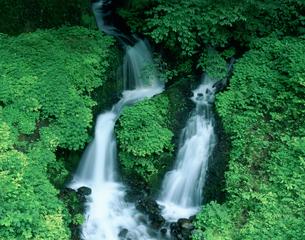箱島湧水の写真素材 [FYI03332424]