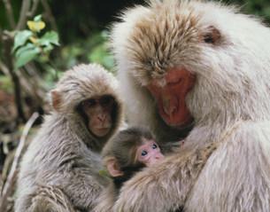 猿の写真素材 [FYI03335213]