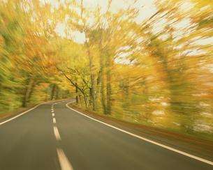 秋の森を走るの写真素材 [FYI03335287]