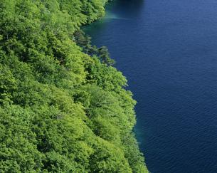 十和田湖畔の新緑の写真素材 [FYI03335305]