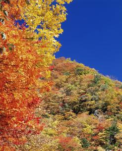 山の秋の写真素材 [FYI03335313]