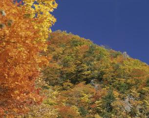 山の秋 十和田の写真素材 [FYI03335314]