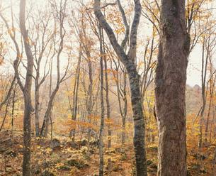 晩秋の森の写真素材 [FYI03335320]