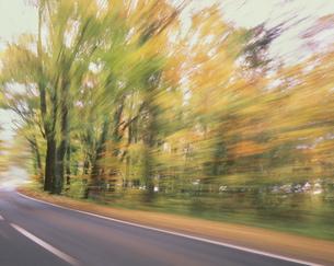 秋の森を走るの写真素材 [FYI03335338]