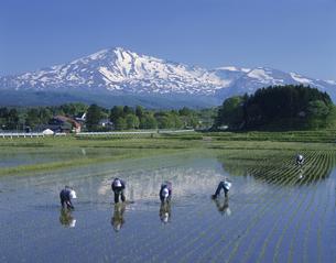 残雪の鳥海山と田植えの写真素材 [FYI03335749]
