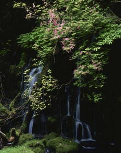 つつじ咲く元滝の写真素材 [FYI03335802]