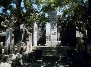 富岡八幡宮境内 大関力士の碑の写真素材 [FYI03337921]