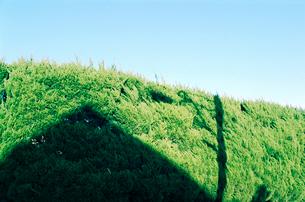 カイズカイブキの生け垣に落ちた人家の影の写真素材 [FYI03338884]