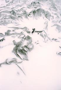 雪が積もった網の写真素材 [FYI03338895]