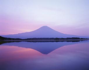 朝焼けの富士山 田貫湖の写真素材 [FYI03339122]