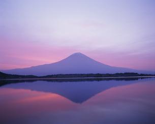 朝焼けの富士山と田貫湖の写真素材 [FYI03339134]