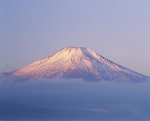 紅富士 山中湖畔より眺望の写真素材 [FYI03339151]
