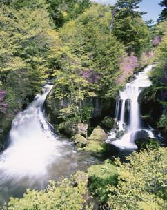 ツツジ咲く竜頭の滝の写真素材 [FYI03339196]