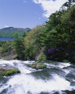 ツツジと竜頭の流れと中禅寺湖の写真素材 [FYI03339197]