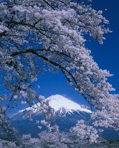 桜と富士山の写真素材 [FYI03339288]