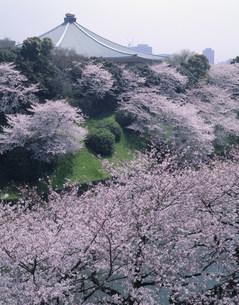 武道館とサクラの写真素材 [FYI03339371]