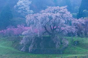 本郷の瀧桜(又兵衛桜)の写真素材 [FYI03339635]