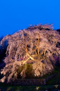 本郷の瀧桜(又兵衛桜)の写真素材 [FYI03339636]