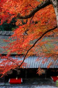 鳥居本鮎宿の紅葉の写真素材 [FYI03339696]