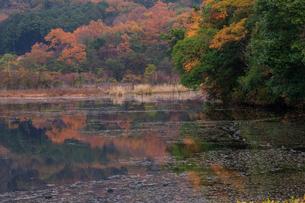 深泥池の紅葉の写真素材 [FYI03339790]