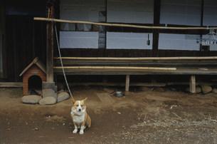 農家の庭先に居る犬の写真素材 [FYI03340163]