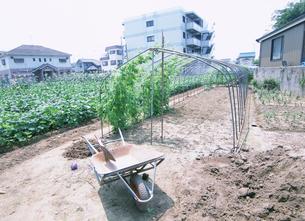 畑 一輪車が置いてある枝豆畑の写真素材 [FYI03340234]