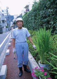 農業 バケツ栽培の稲作を楽しむ男性の写真素材 [FYI03340241]