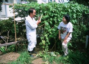 農業 団地内農園作りのゴーヤを手にする男性の写真素材 [FYI03340247]