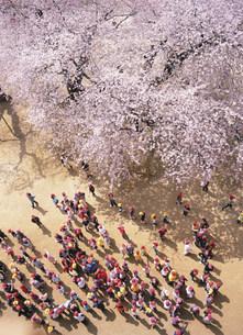 桜の花の下の新入生歓迎の集いの写真素材 [FYI03341509]