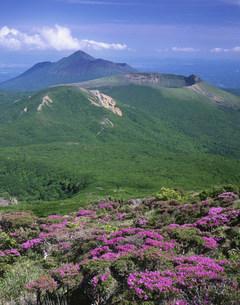 ミヤマキリシマ咲く韓国岳より高千穂連峰の写真素材 [FYI03341611]