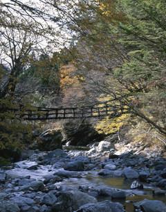 二重かずら橋の写真素材 [FYI03341792]