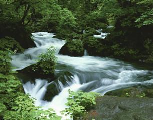 夏の奥入瀬渓流(阿修羅の流れ)の写真素材 [FYI03341856]