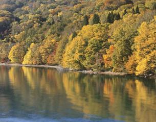 秋の十和田湖畔の写真素材 [FYI03341901]